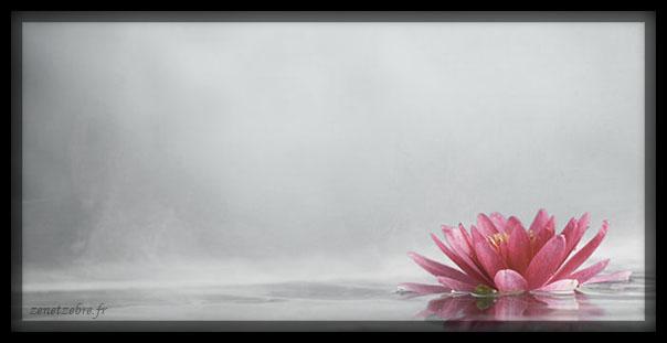 Zen-fleur-lotus-minimalisme